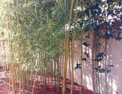 Bambous appartement 2 pièces